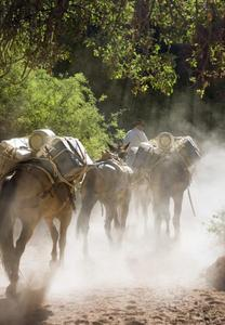 Havasupai 04 Mule Train
