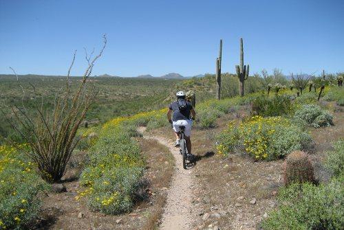 Phoenix and Scottsdale Land Adventure Tours